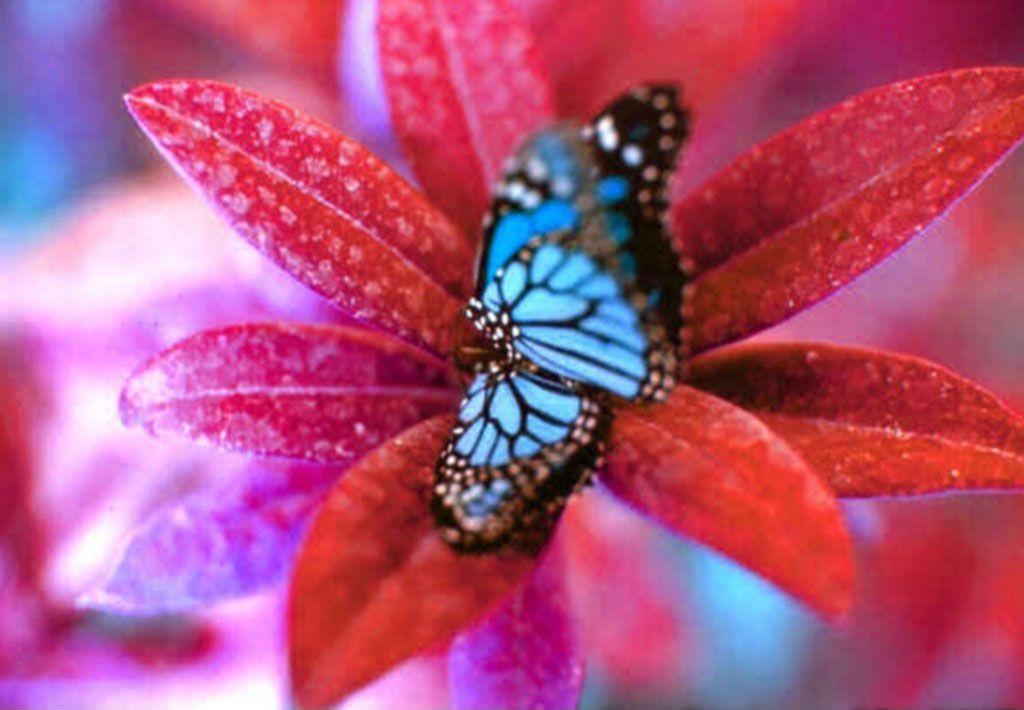 les papillons Wsut9qhb